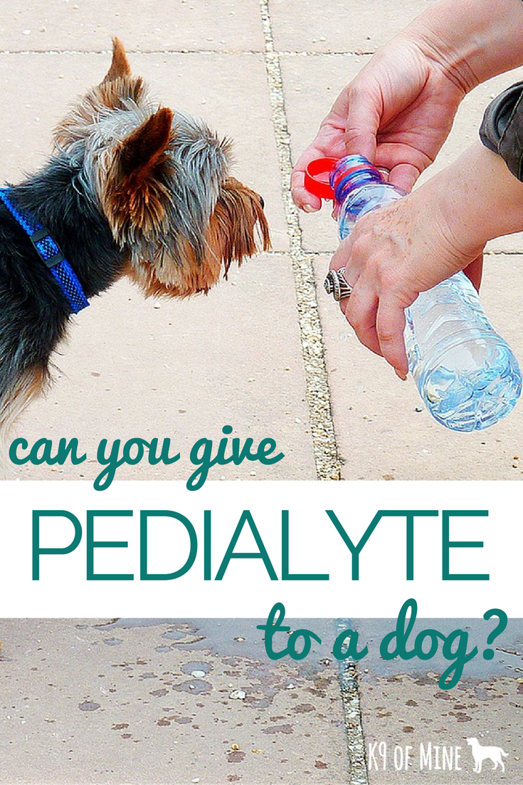 Can You Give Pedialyte To A Dog Evaluating Curing Dehydration Natural Dog Care Holistic Dog Care Natural Dog