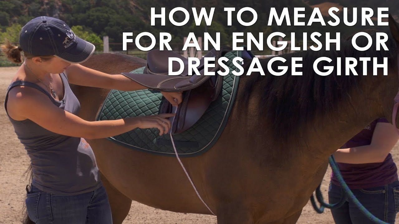 How to measure your horse for english dressage girth