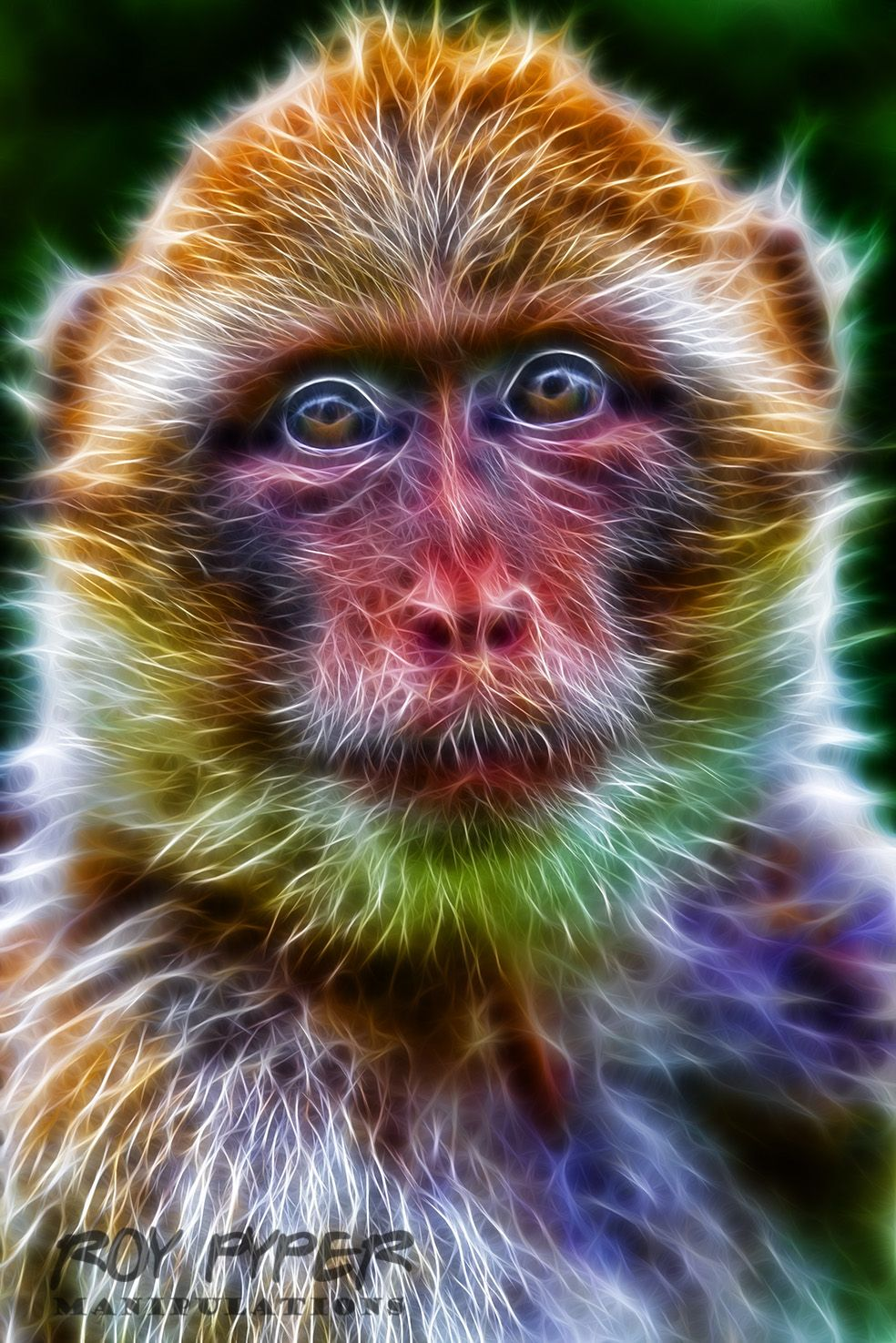 Macaque Monkey Fractalius Re Edit By Nerdboy69 On Deviantart Images, Photos, Reviews
