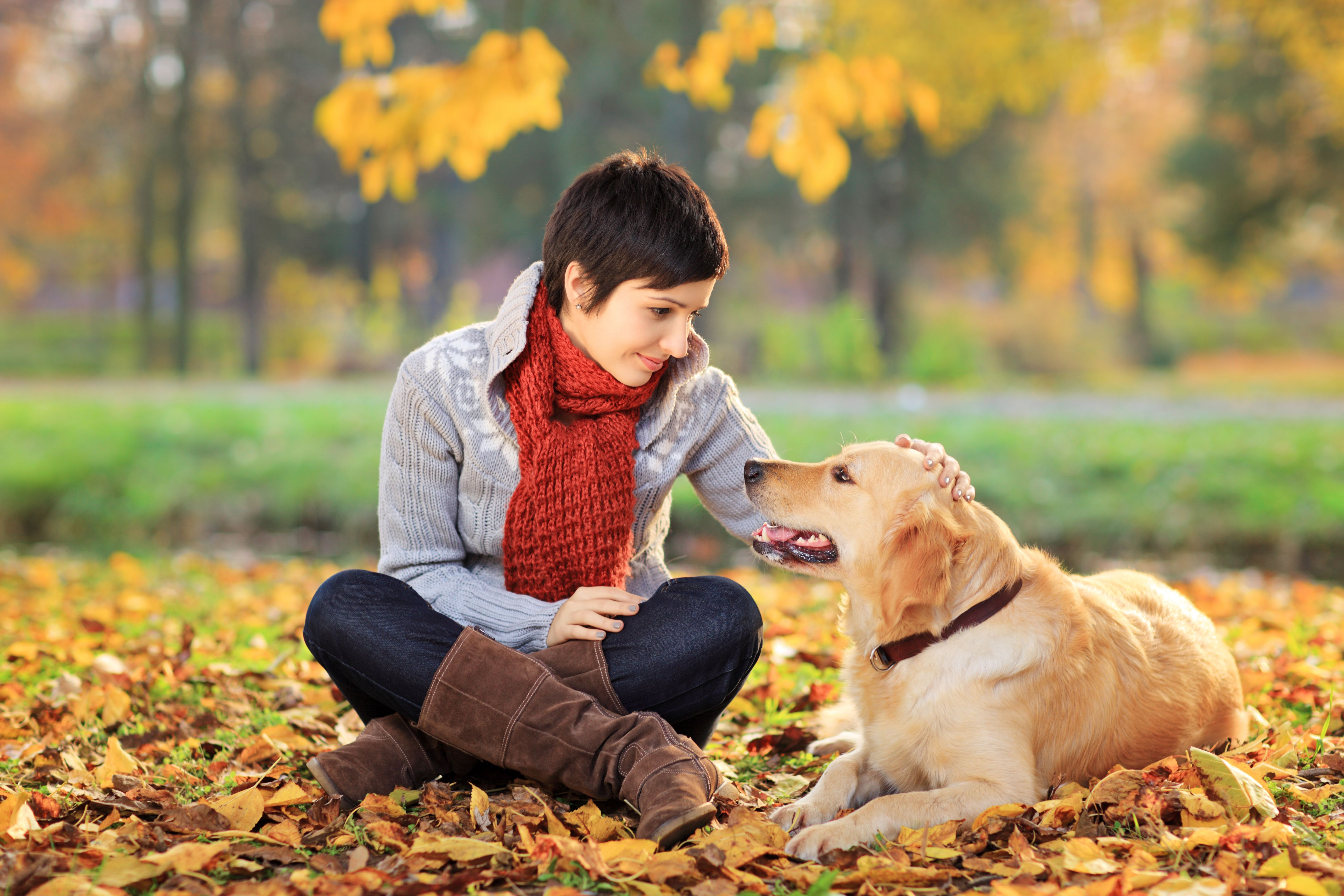 Diabetic Alert Dogs What they Can Do For you Service