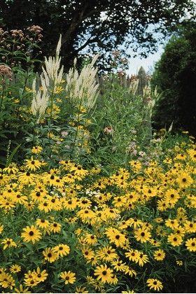 Wetland Habitat Mix Wildflower Field Seeds Resource Outdoor Gardens Natural Landscaping Wild Flowers