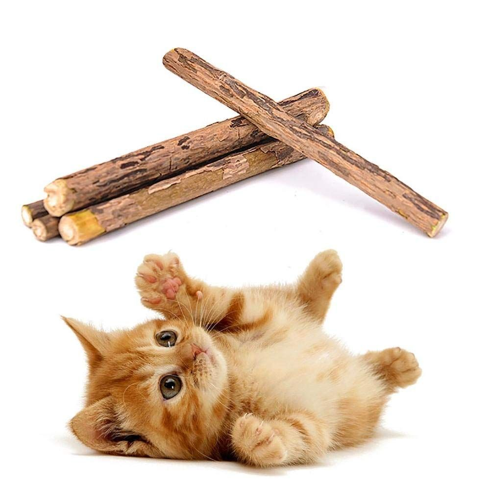 Catnip Sticks 5 Pieces Natural Matatabi Silvervine Cat Stick Catnip Chew Sticks Cleaning Teeth Toothbrush Best Interactive Cat Toys Cat Toys Cats And Kittens