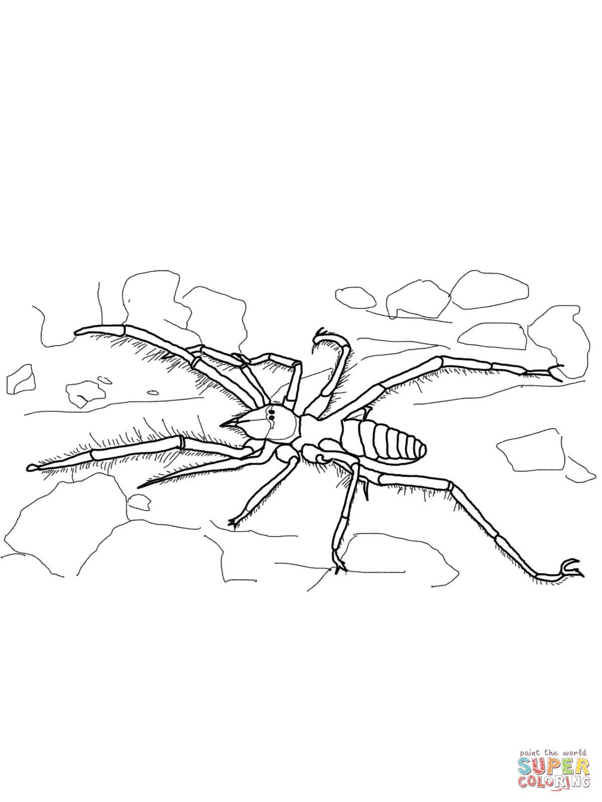 Incy Wincy Spider coloring page | Free Printable Coloring Pages | 1600x1200
