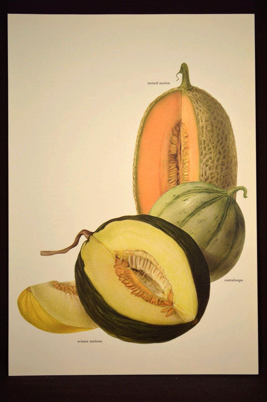 Melon Wall Decor Fruit Wall Art Kitchen Decor Garden Melons | Wall ...