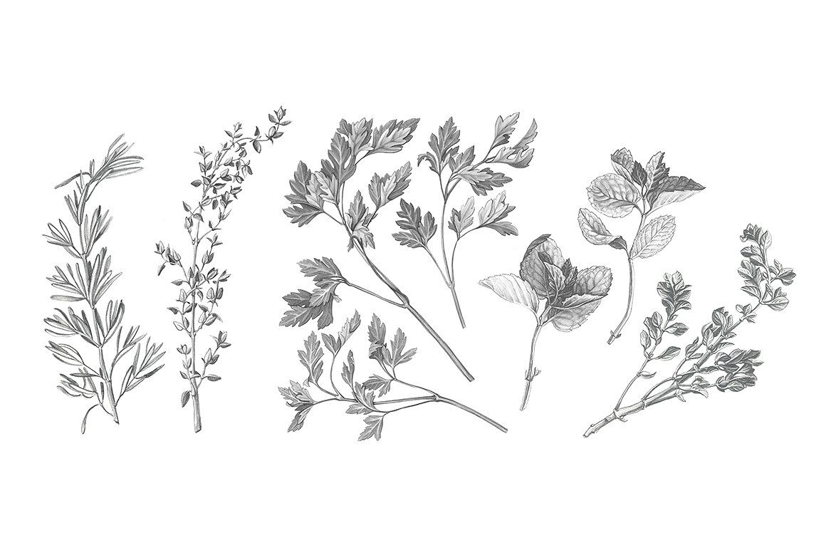Garden Herbs Drawing Set | Drawing set, Garden drawing ...