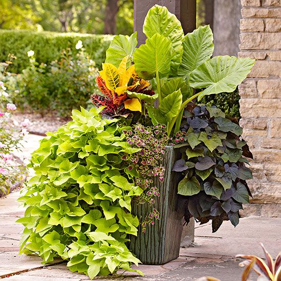 Use These Tropical Plants To Transform Your Patio