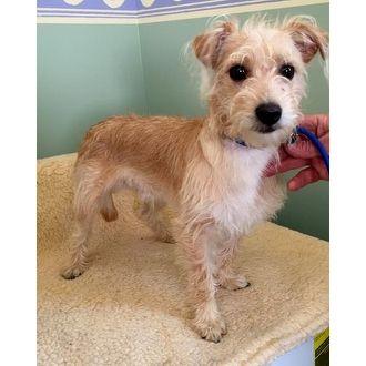 Emma A Home 4 Ever Rescue Costa Mesa California Pets