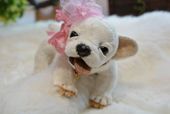 Puppy Chihuahua Reina Eyes Open And Close By Irina Fedi Bear Pile