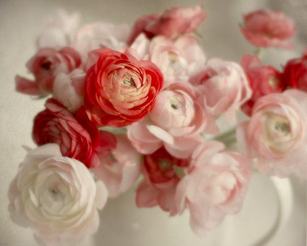 ranunculus and poppies light pink - Google Search