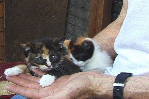 Taming Feral Kittens UrbanCatLeague Kitten care, Feral