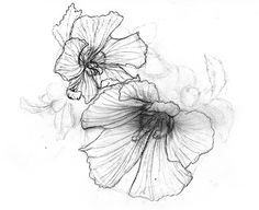 Hibiscus Syriacus Tattoo Google Search Flower Tattoos Nature