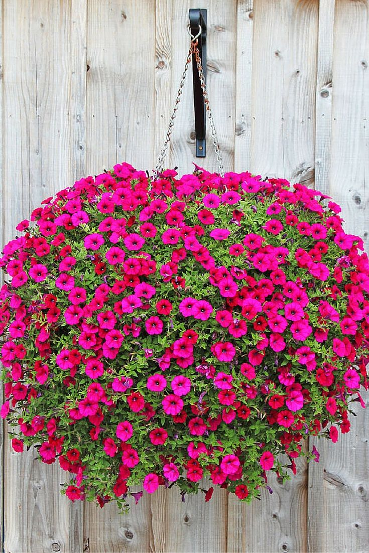 70 Hanging Flower Planter Ideas (PHOTOS and TOP 10) | Hanging ...