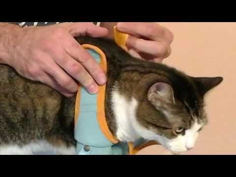 Kitty Care Harness protects you from scratches & bites, from Healthy Kitty.