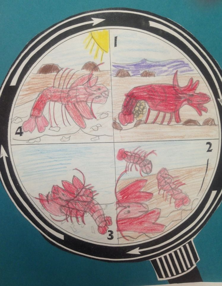Crayfish Life Cycle Diagram School Content Pinterest Social