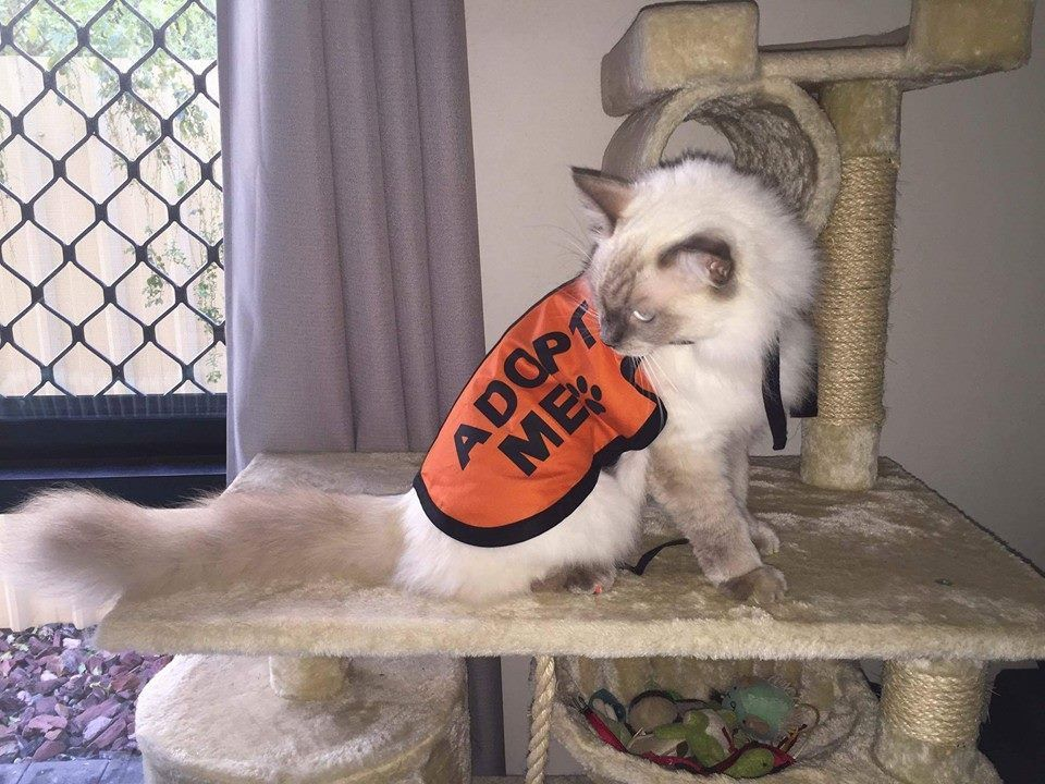 Cats Can Wear Adopt Me Vests Too Sponsor A Jacket Today For