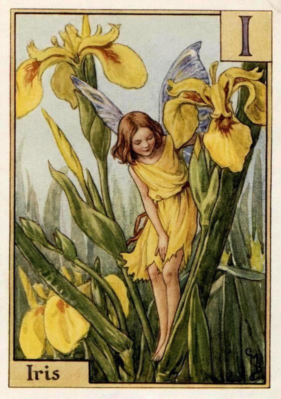 Iris Alphabet Letter I Flower Fairy Vintage Print C 1940 Cicely Mary Barker Book Plate Illustration Fairy Art Flower Fairies Vintage Fairies