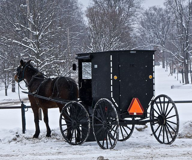 Snow Amish Buggy...