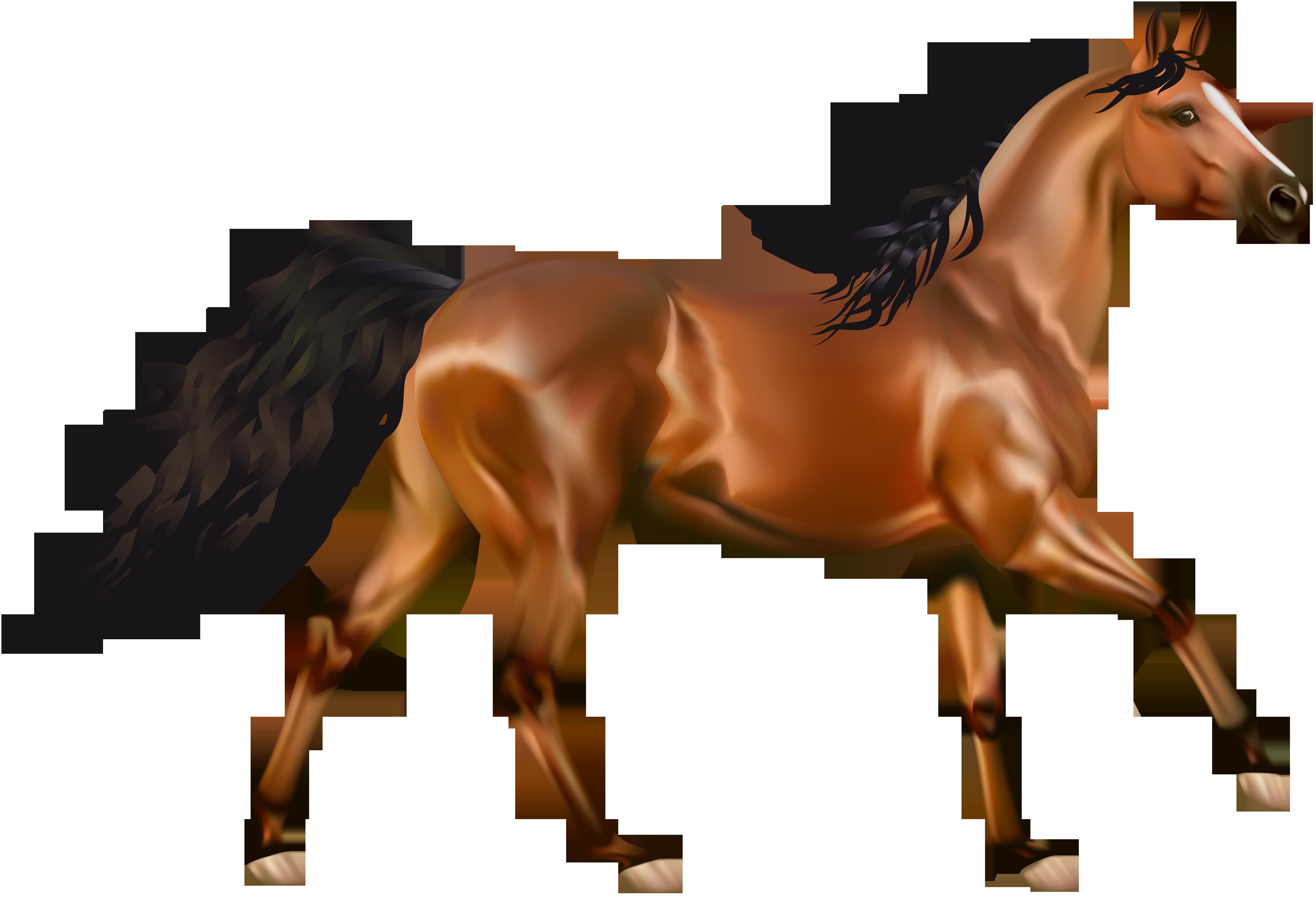 Картинка коня на белом фоне