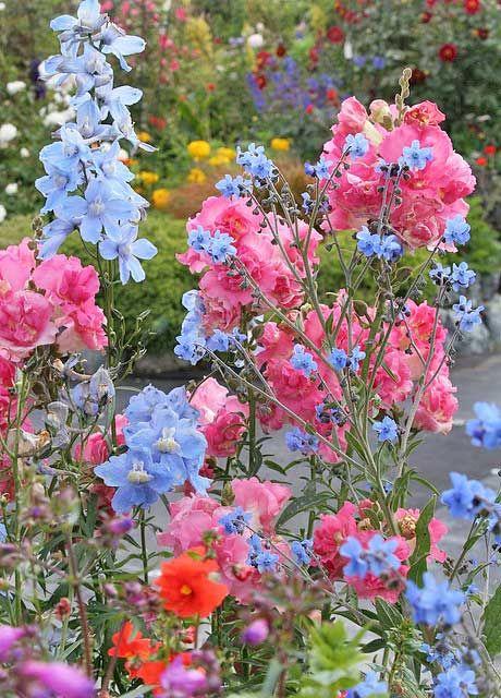 symphonie de couleurs garden pinterest planter des fleurs fleur jardin et belles fleurs. Black Bedroom Furniture Sets. Home Design Ideas
