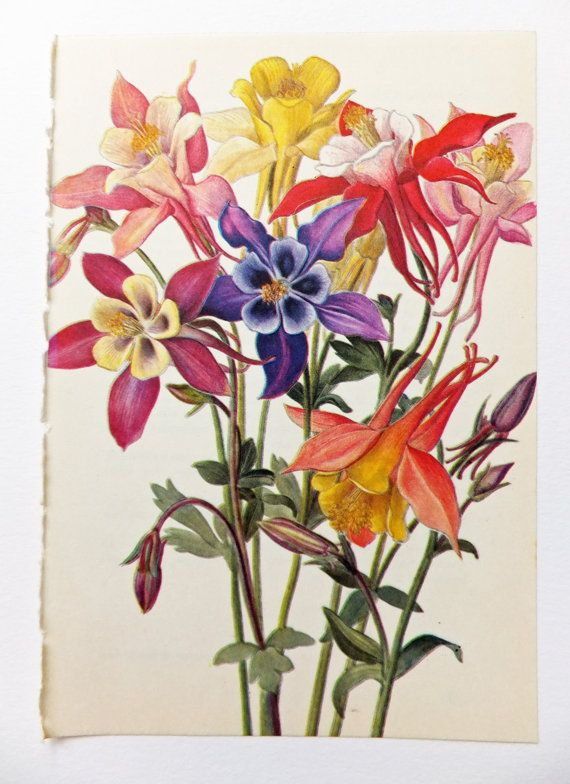 Your Place To Buy And Sell All Things Handmade Wildflower Drawing Botanical Prints Wildflower Tattoo