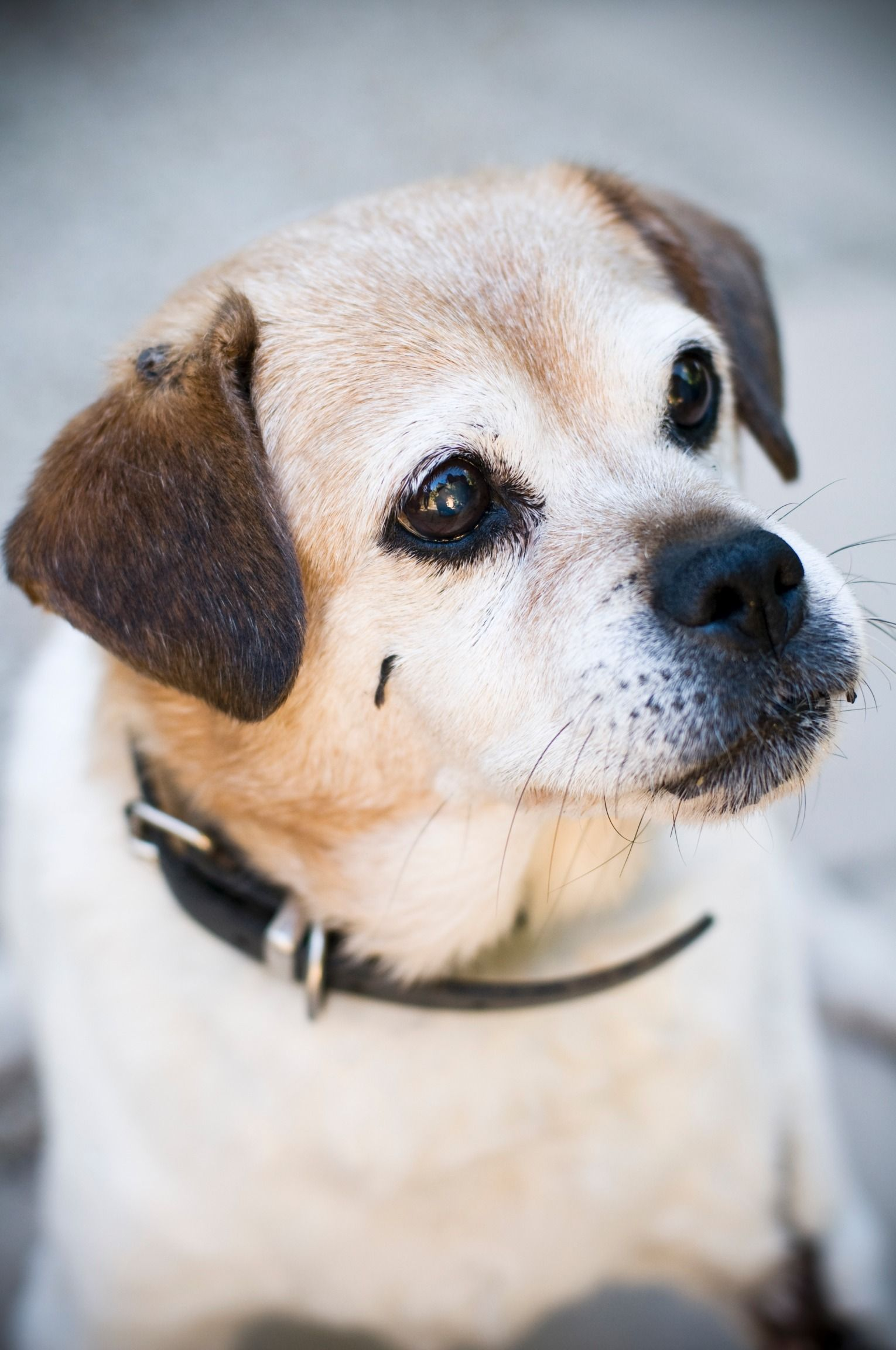 This Life Threatening Condition Is Fairly Common In Dogs And Cats