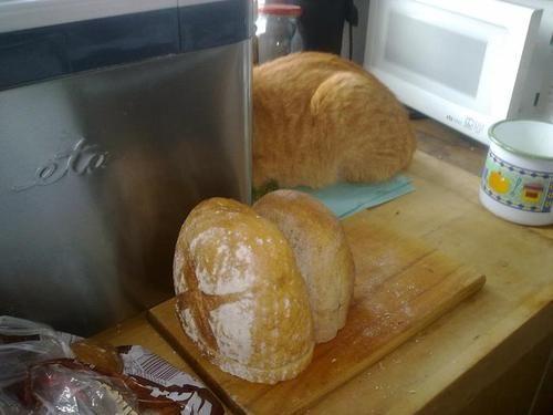 あ、あんな所にもパンが。(違)
