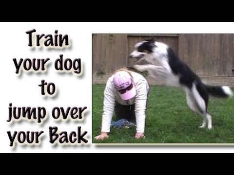 Jumping Over Your Back Clicker Dog Trick Training Youtube Dog