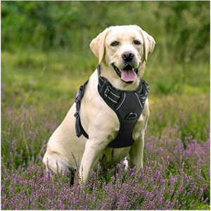 Rabbitgoo Front Range Dog Harness No Pull Pet Harness Adjustable Outdoor Pet Vest 3m Reflective Oxford Material Vest For Do Pet Harness Dog Harness Hiking Dogs