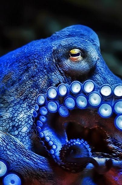 Blue | Blau | Bleu | Azul | Blå | Azul | 蓝色 | Color | Form | Texture | octopus