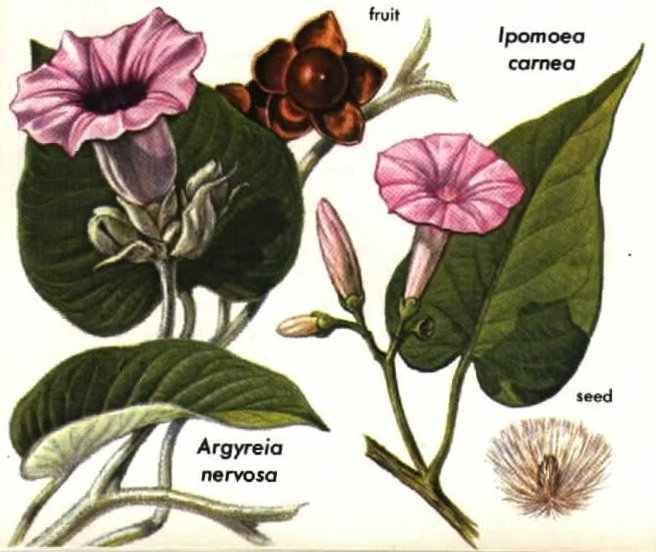 Hibiscus tea weight loss reviews photo 1