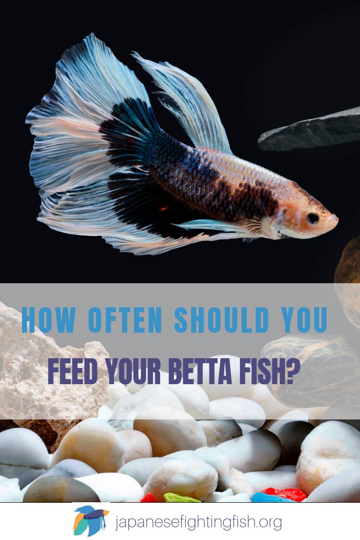 Betta Fish Feeding Instructions The Best Betta Fish Food Betta Fish Care Betta Fish Betta