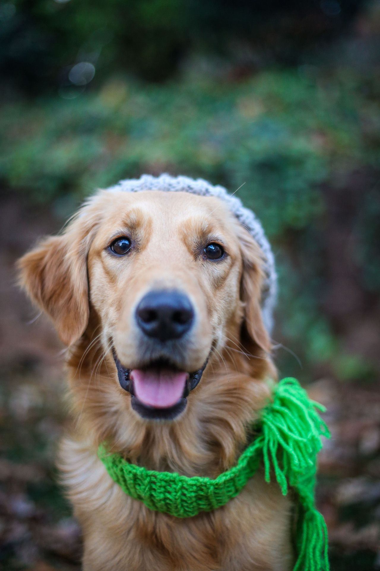 Creating A Healthy Diet For Your Dog You Can Get Additional