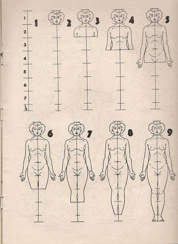Pin de Astrid Jurado Freniche en Dibujo anatomico | Pinterest ...