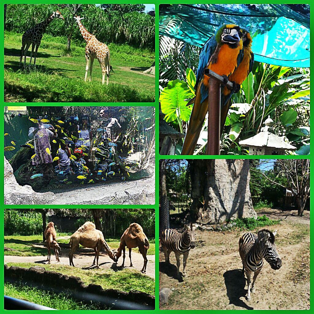 Bali Zoo Taman Safari Indonesia Bali Awesome Places