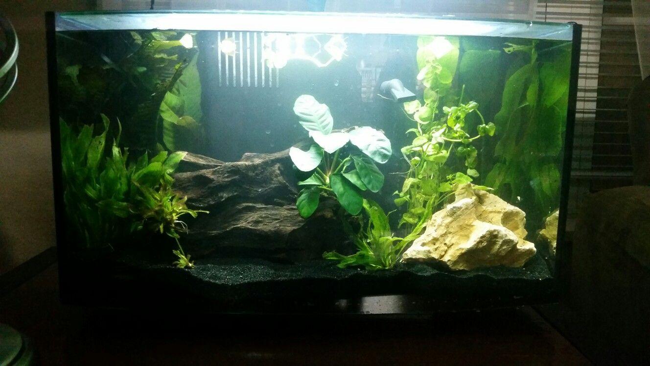 Imagitarium 6 2 gallon planted freshwater tank aquariums for 4 gallon fish tank