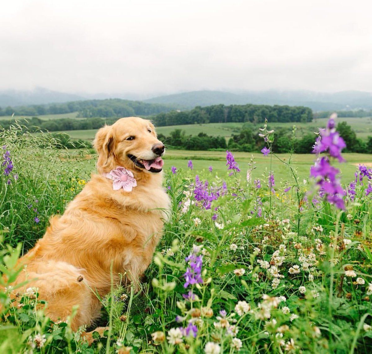 Puppies with flowers cute puppy pinterest