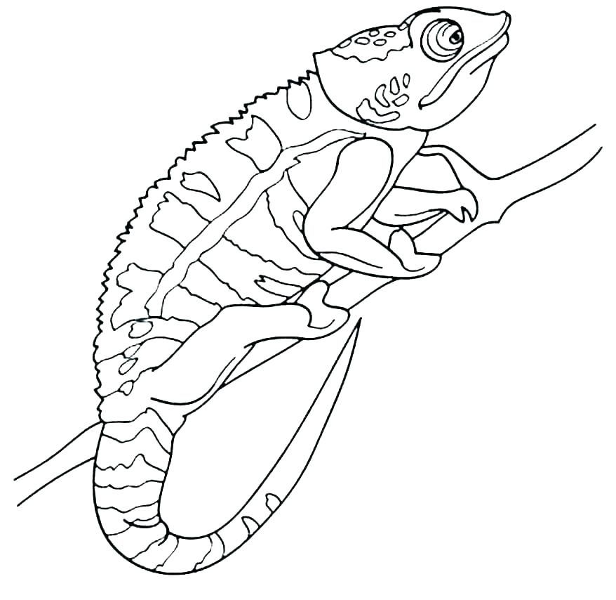 Chameleon Coloring Pages Free Printables Snake Coloring Pages
