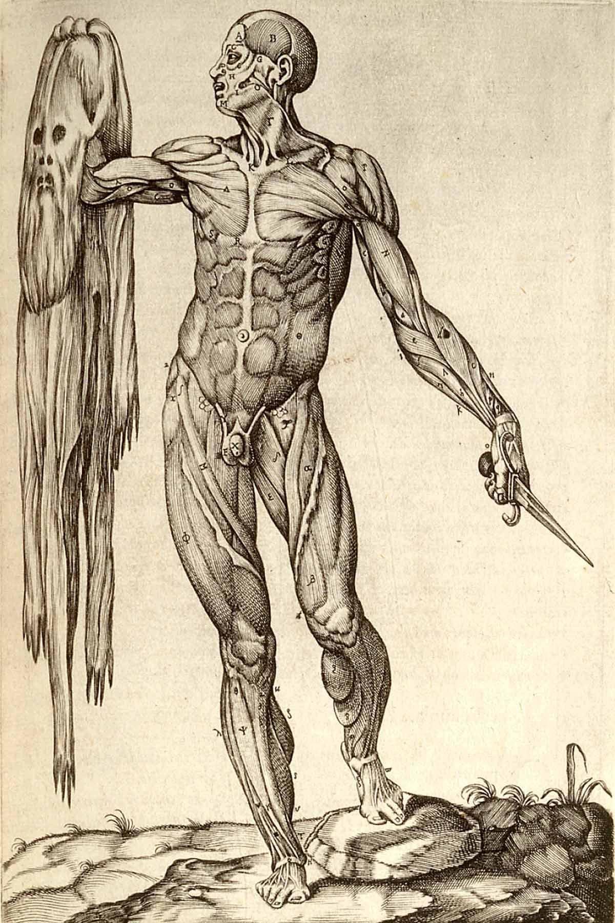 Pin by Oleg A on Anatomy | Pinterest | Anatomy