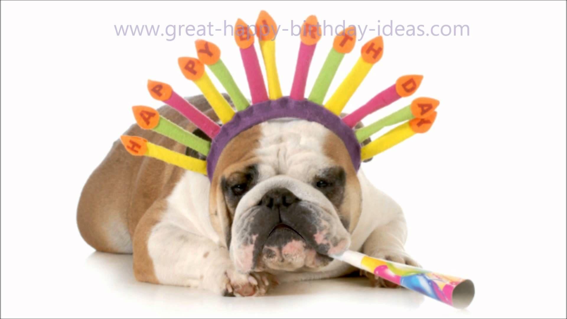 Funny Dog Happy Birthday Song Happy Birthday Funny Dog Birthday Quotes Funny Happy Birthday Funny