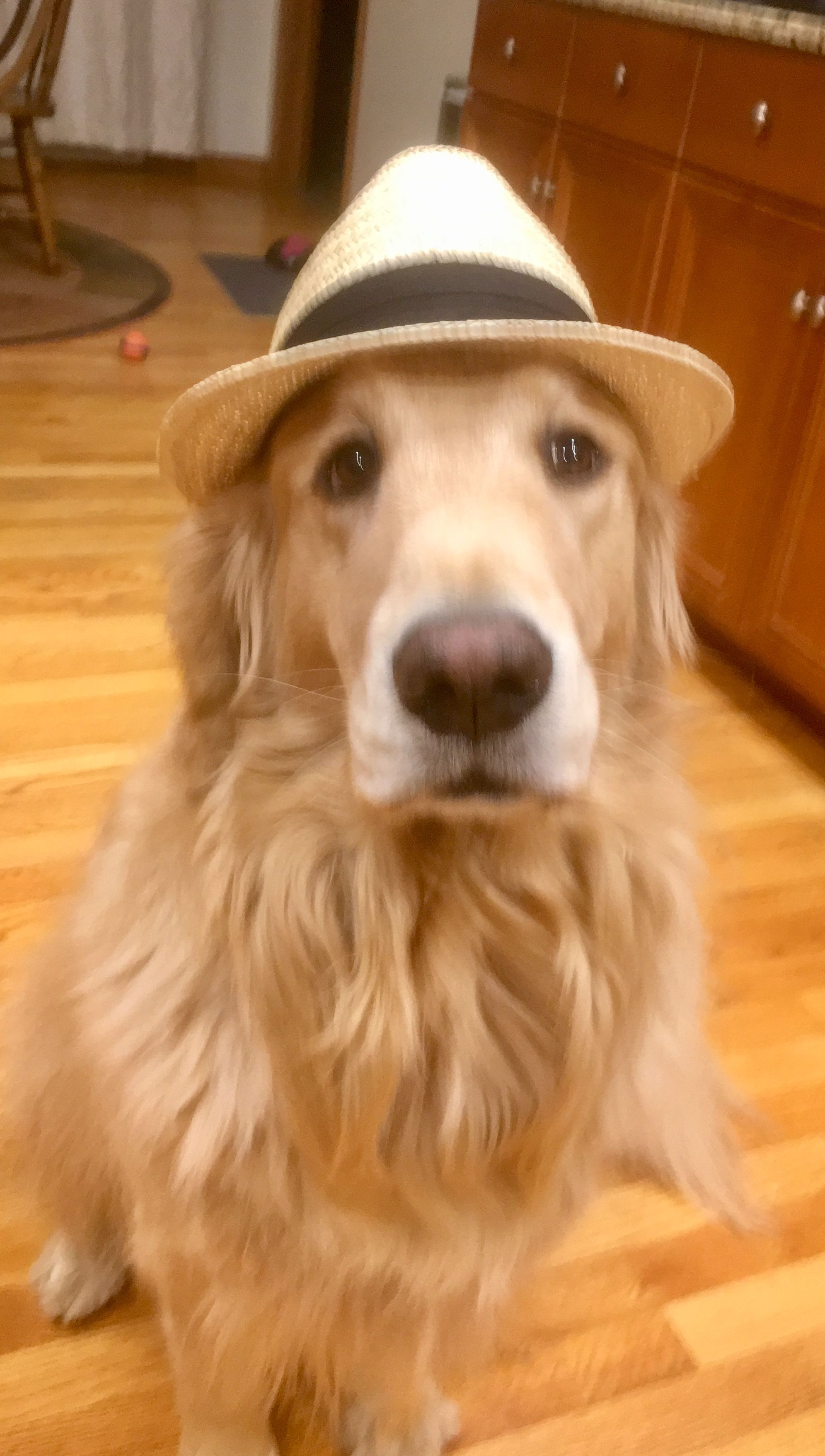 Pin By Paul On Pets Pets Golden Retriever