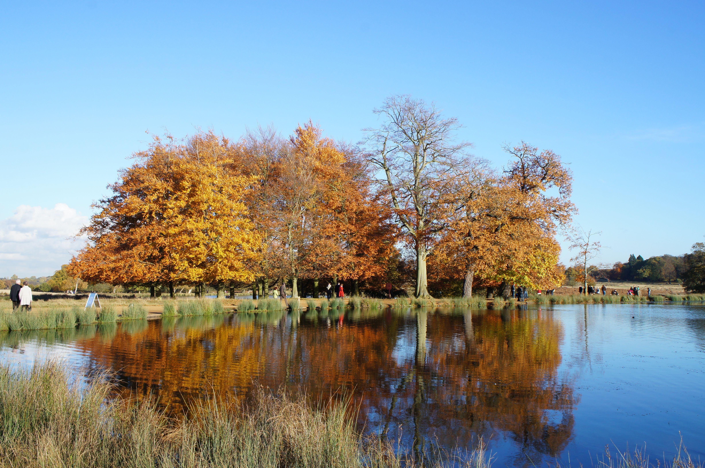 Autumn in Richmond Park 2012 | Richmond Park, London | Pinterest