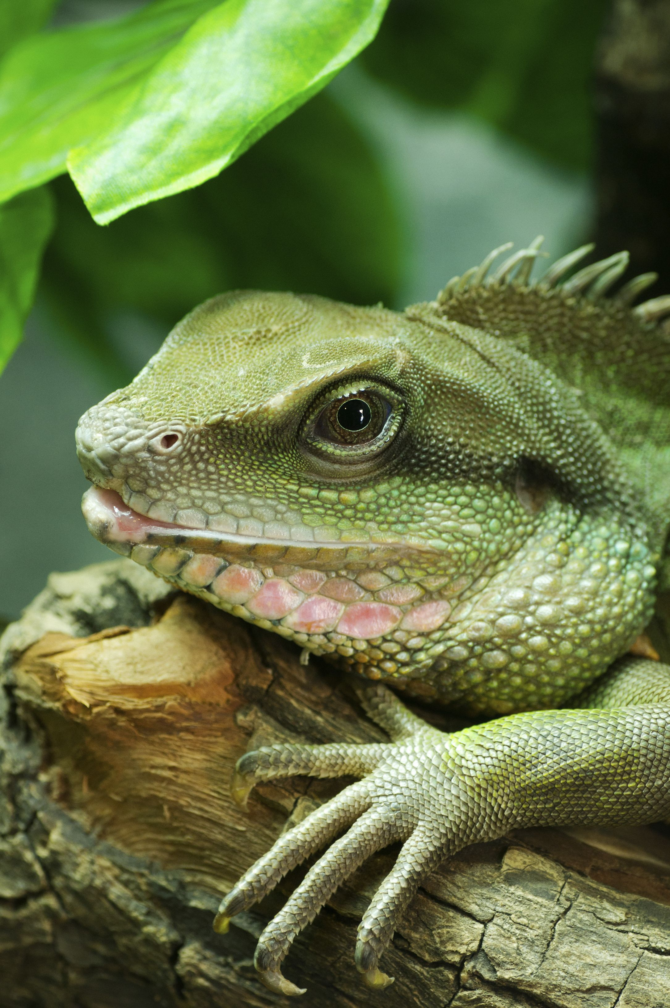 Wanna Iguana Make Sure You Re Ready For One First Click