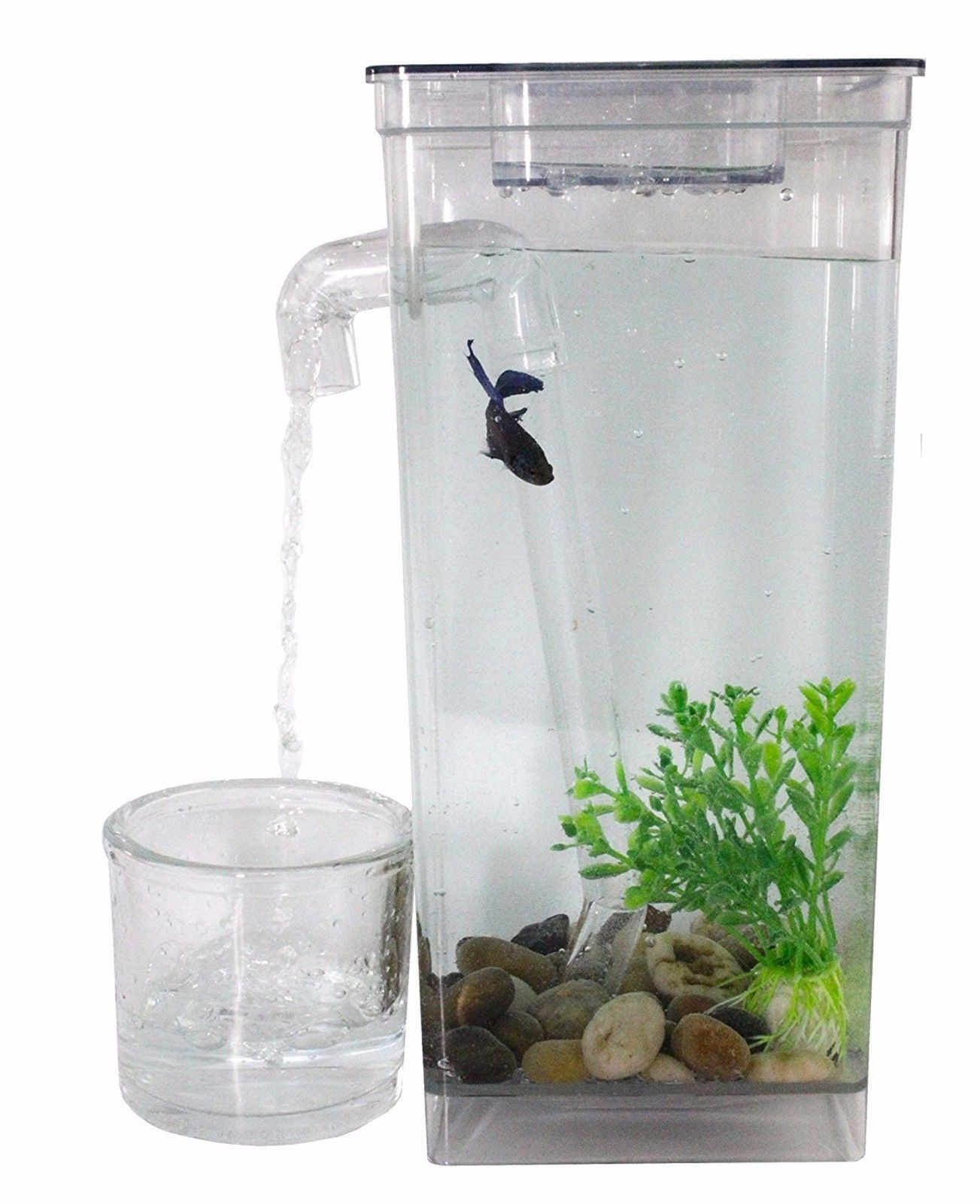 Small Fish Tanks Self cleaning fish tank, Cleaning fish
