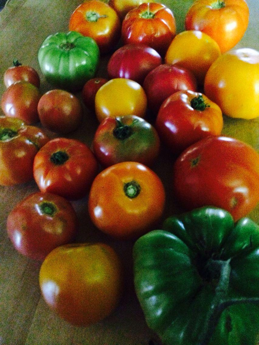 Summer Heirloom tomatoes at Deepwoods Farm, Warren, AR