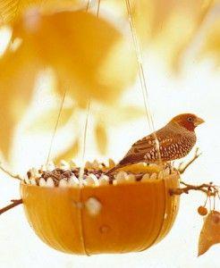 Vogelvoedhuisje gemaakt van sinaasappel of pompoen.