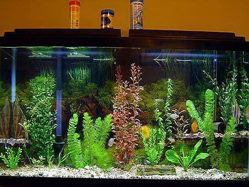 Small fish tank decoration ideas interior design for Aquarium decoration ideas