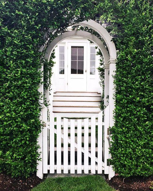 The streets of Nantucket are lined with green.  . . . . . #pursuepretty #thehappynow #nantucket #massachusetts #ivy #greenery #green #white #whitepicketfence #darlingweekend #darlingmovement #live #livelife #lifestyle #liveauthentic #livecolorfully #vscocam #vscogood #townandcountry #veranda