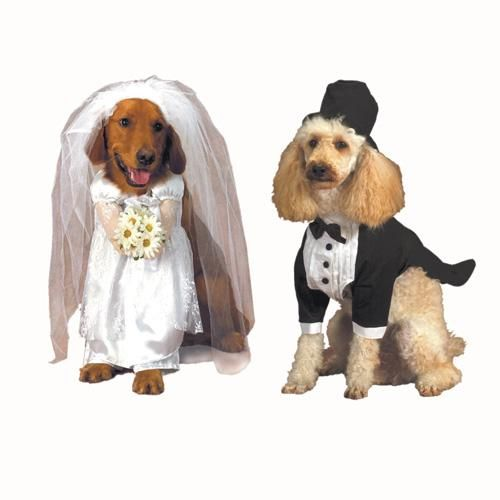 Bride And Groom Wedding Dog Costumes Dog Costumes Funny Puppy