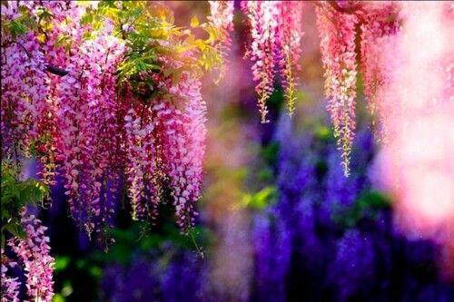 Túnel de flores