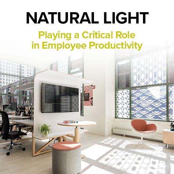 Natural Light Kimball Office Office Interior Design